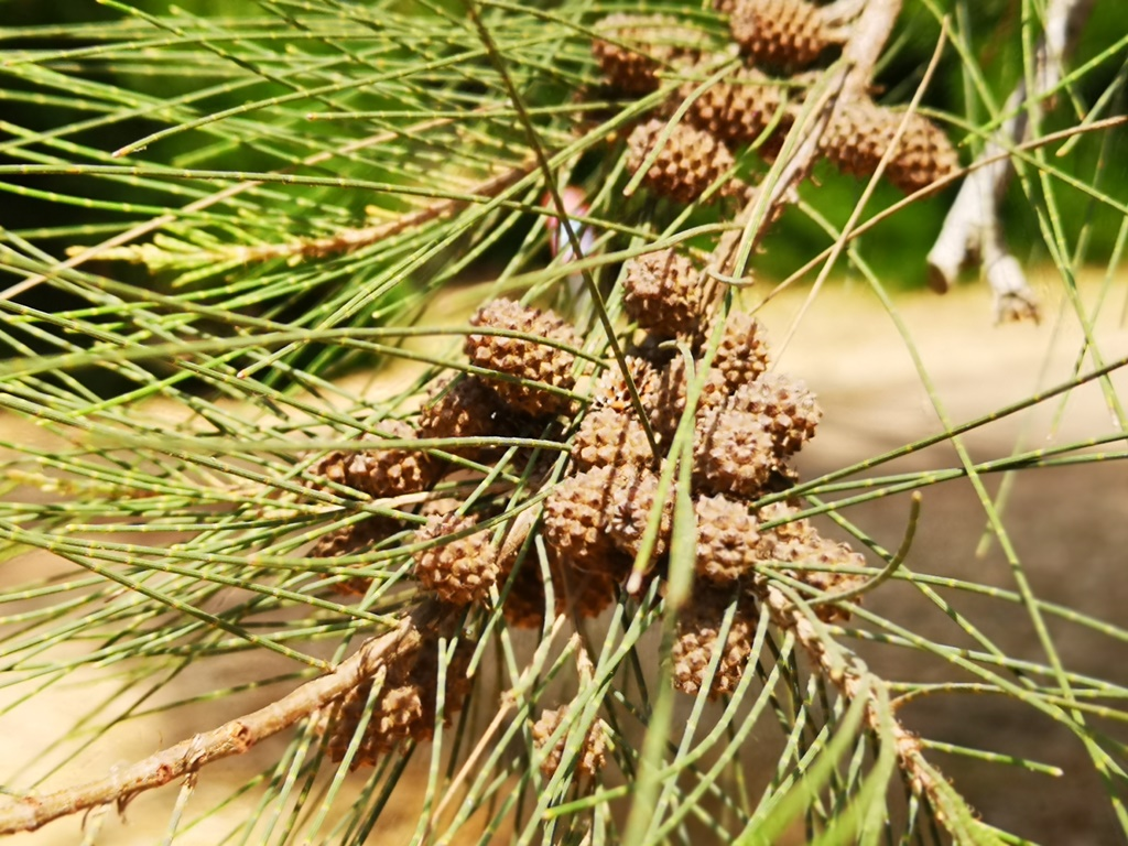 חמניה | רפואה משלימה: כיצד ניתן לטפל באלרגיות עונתיות?